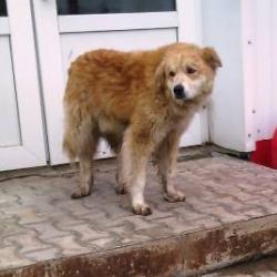 Поудивлялись на коми-пермяцких собак, которые отличаются внушительными размерами, абсолютным равнодушием к окружающим и похожи то на льва, то на медведя…