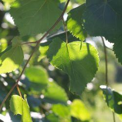 Коми-пермяки до сих пор с особым трепетом относятся к деревьям. Это выражается и в арт-пространстве, и в рекламе.
